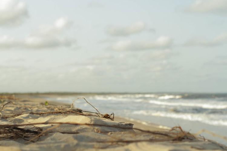 restinga Restinga Bahia/brazil Brasil 50mm Tropical Climate Water Sea Beach Wave Sky Horizon Over Water