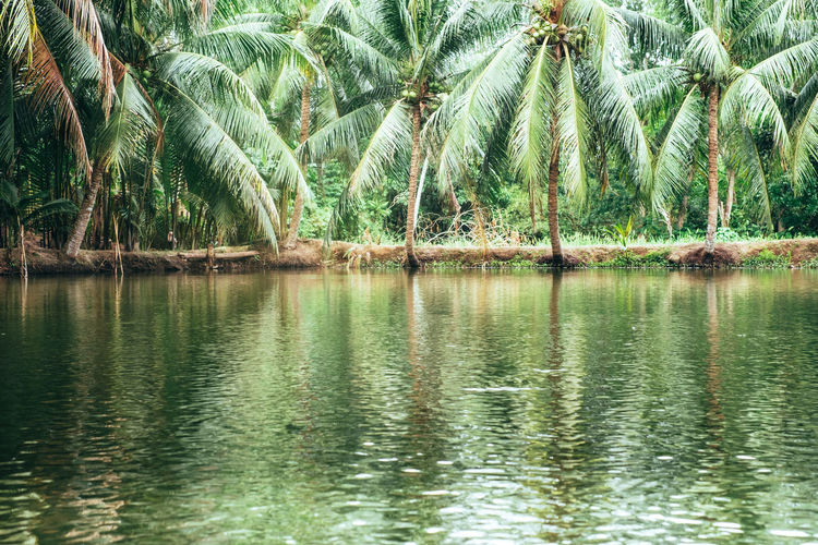 Scenic view of palm trees