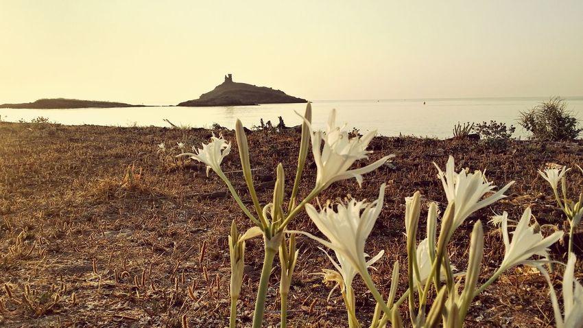 Morning Corsica Corsica2015 Enjoying Life Beach Sunrise Corse Plage Cap Corse
