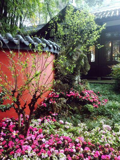 杜甫草堂 唯此偏安一隅 Flower Tree Growth Outdoors Beauty In Nature Built Structure