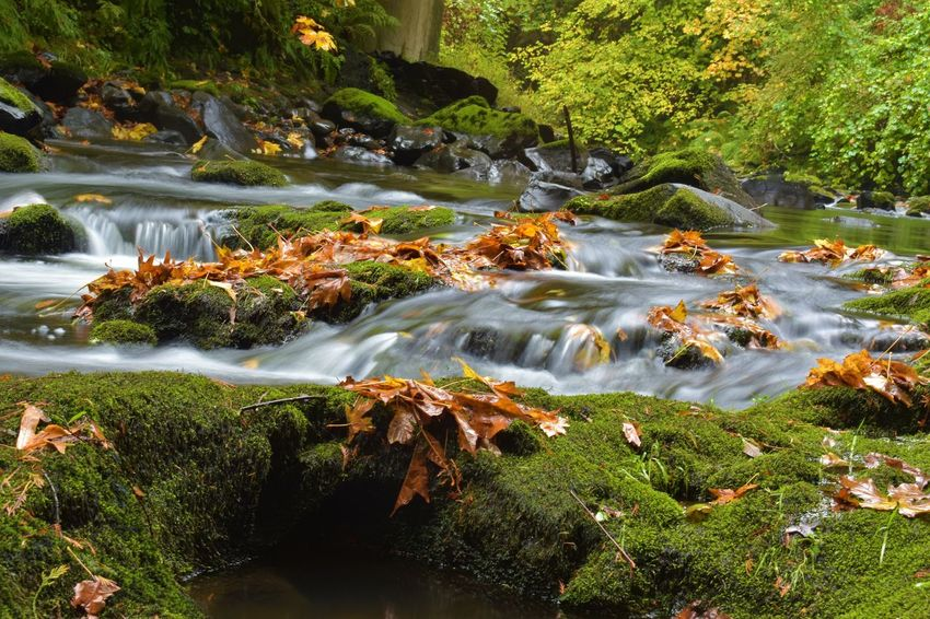 Beauty In Nature Blurred Motion Day Forest Freshness Green Color Growth Landscape Long Exposure Motion Nature No People Outdoors Plant River Rock - Object Scenics Sky Tranquil Scene Tranquility Tree Water Waterfall