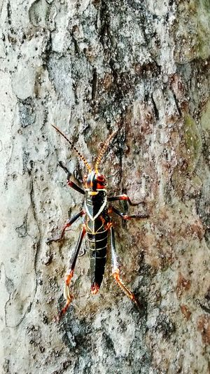 Nature Tree Sunlight Day No People Beauty In Nature Insect Insect Photography Cricket! Crickets Trees Insects  Animals In The Wild Animal Animal Themes