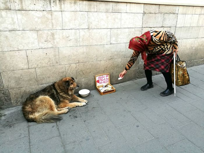 Dog Relaxing By Woman Donating Money In Box On Footpath