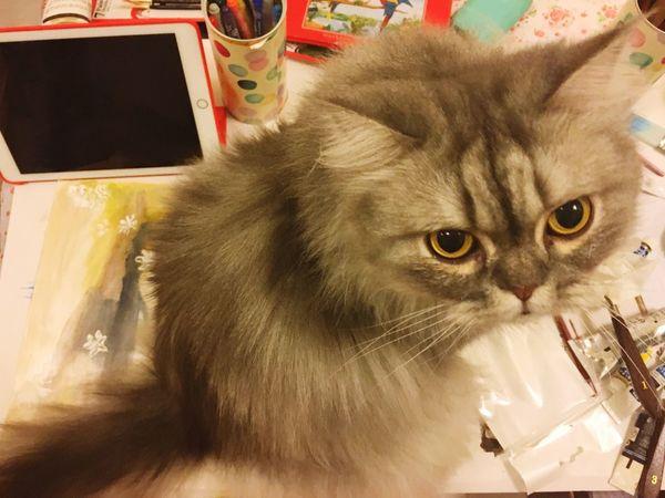 Cat Persiancat Sitting on Painting Evil Cat