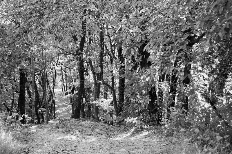 Steirische Toscana Autumn Autumn colors Best EyeEm Shot Bäume EyeEm EyeEm Best Shots EyeEm Selects Herbst Herbststimmung Steiermark Sunset_collection Toscana Travel Waldspaziergang Wein Wood Bestoftheday Hill Hügel Hügelland Mauntain Styria Sunset Wald Weinberge