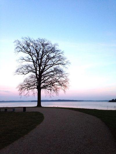 Hugging A Tree Tree Sunset in Schwerin
