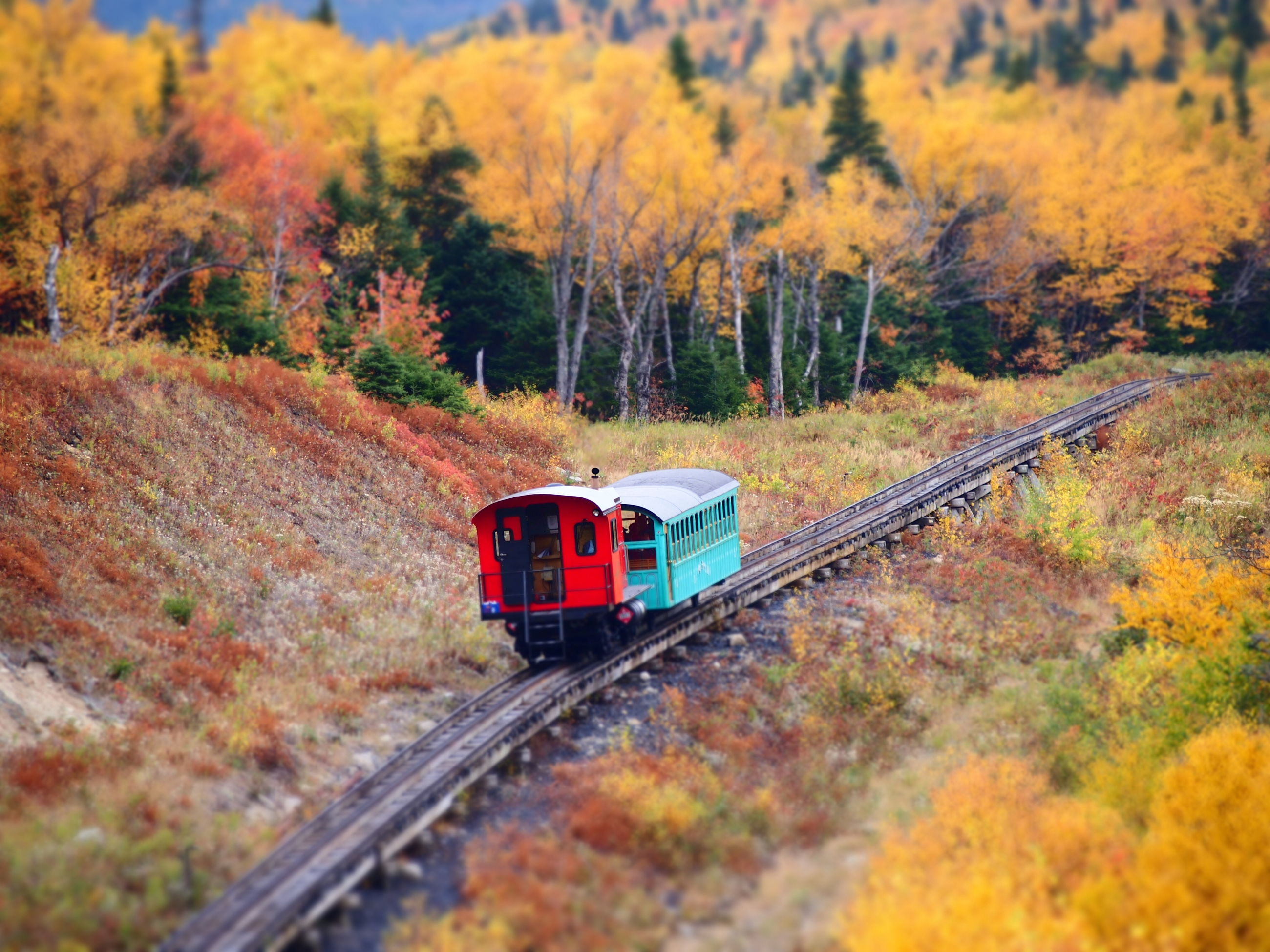 railroad track, rail transportation, tree, transportation, public transportation, forest, autumn, tranquility, nature, train - vehicle, selective focus, tranquil scene, travel, orange color, outdoors, railway track, no people, red, mode of transport, day