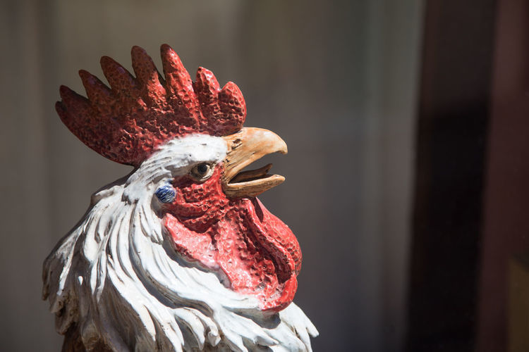 Close-up of a chicken rooster statue
