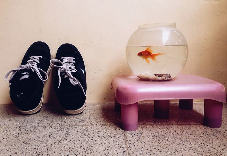Getting ready for a jog Jogging Jog Still Life StillLifePhotography Fishtank Goldfish Fishpot Fish Pet Morning Shoes Pair Running Runningshoes Walk Fitness Home Home Sweet Home Showcase April Telling Stories Differently Nature's Diversities Adapted To The City Lieblingsteil Out Of The Box Pet Portraits Summer Exploratorium Visual Creativity