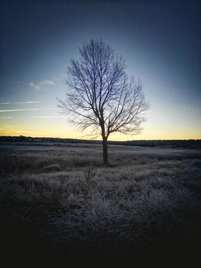 Tree Nature Bare Tree Landscape Sky Beauty In Nature Sunset Outdoors Single Tree Sand Tranquil Scene Branch Tranquility Rural Scene No People Close-up Day Huaweig8 Cloud - Sky Navidad2016 Traveling Home For The Holidays Ruidera Laguna Blanca