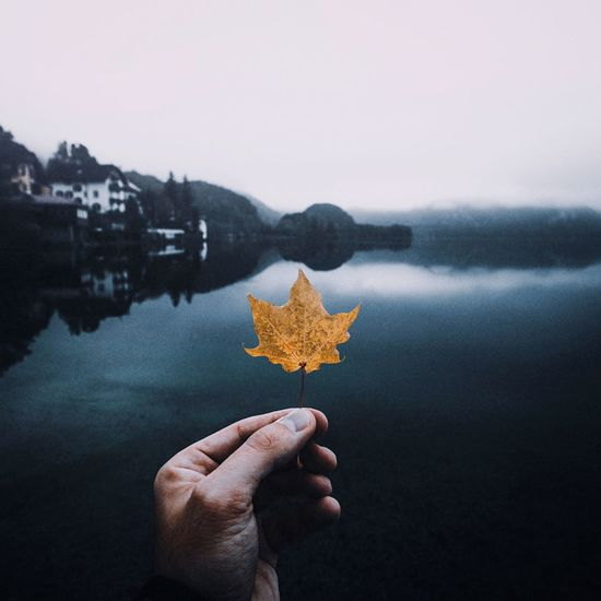 Cropped hand of person holding maple leaf against lake