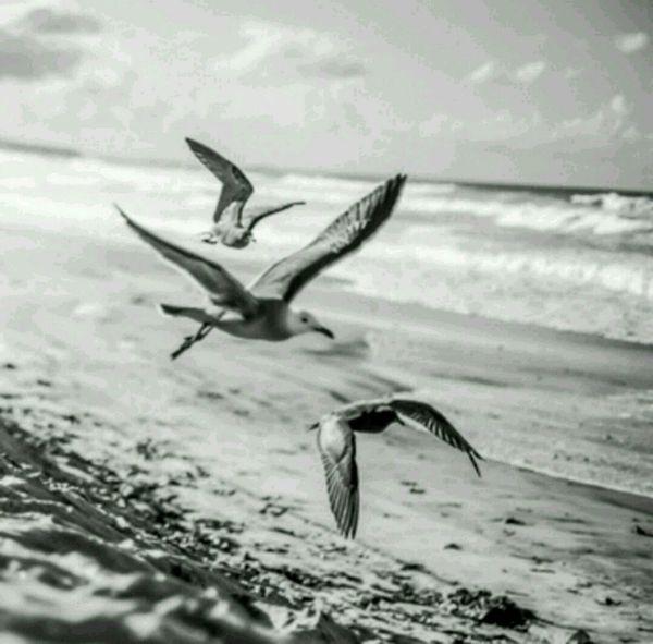 Seagles Couldntgetcloser Landscape Beach Blackandwhitet