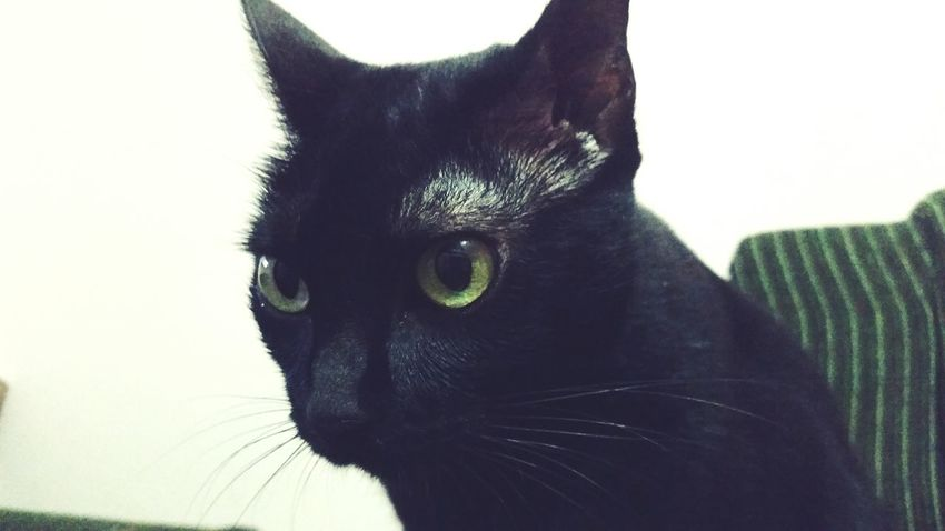 Nega Cat Eyes Cat Cats Cat♡ Catsofinstagram Cat Lovers Taking Photos Hi! Check This Out Hello World
