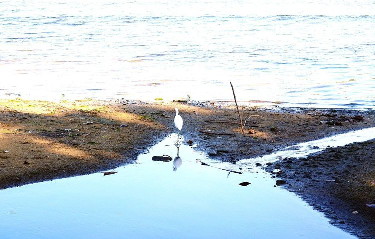 Beauty In Nature Nature_collection Lake View Bird Water Swimming Sea Beach Sea Life Reflection Flock Of Birds Flamingo
