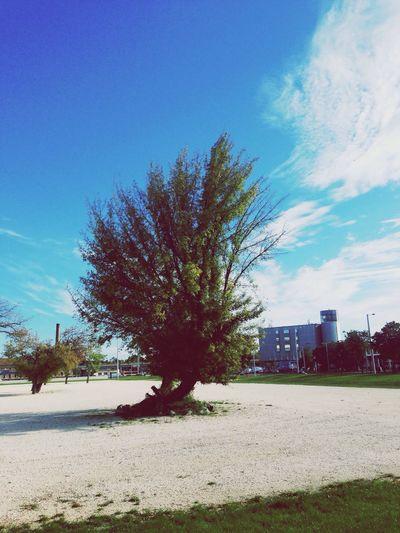 One tree near the Groupama Arena Tree