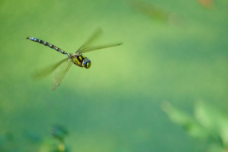 Close-up of insect flying