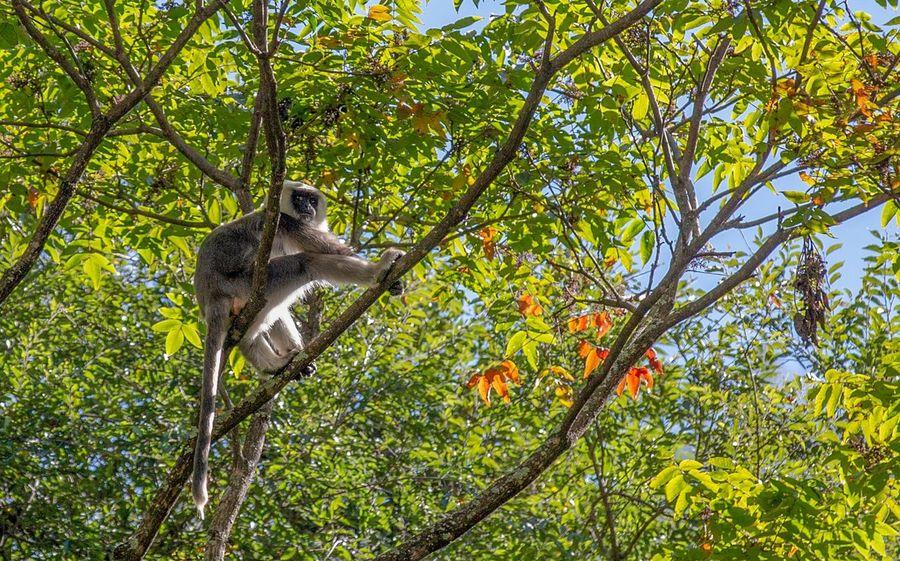 好心情(1) Animal Themes Animal Animal Wildlife Tree Plant One Animal Animals In The Wild No People Growth Mammal Green Color Bird Rodent Forest Day Outdoors Beauty In Nature Vertebrate Branch Nature