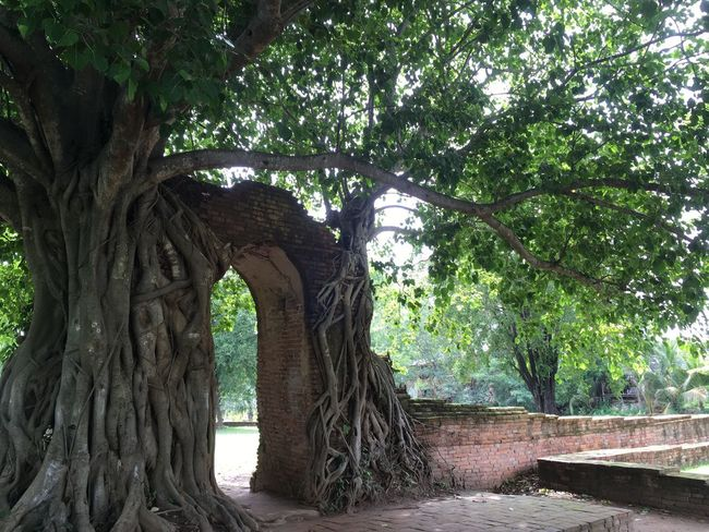 🙏 Tree Day No People Growth Tree Trunk Outdoors Nature Architecture Branch