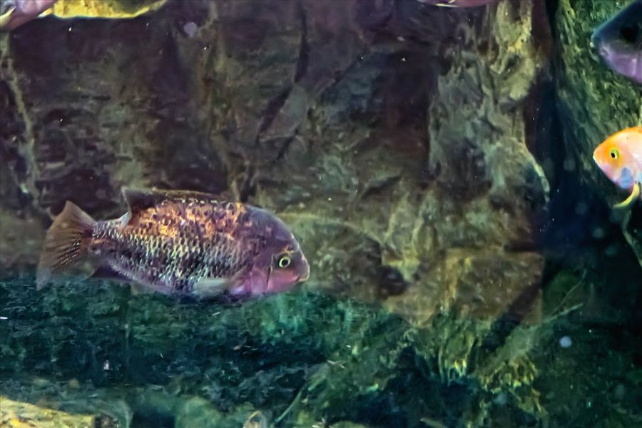 Aquatic life Nature_collection Fishtank Aquatic Life No People Beauty In Nature Pattern, Texture, Shape And Form Exotic Fish