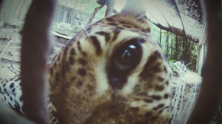 One Animal Animal Themes Mammal Domestic Animals Zoo Zoo Animals  Eye What Does Freedom Mean To You? Portrait Indoors  Close-up Carnivora No People Day Cage Long Goodbye