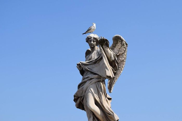 EyeEm Selects Statue Rome, Italy Low Angle View Blue Sky Bird Perching Seagull Moving Around Rome