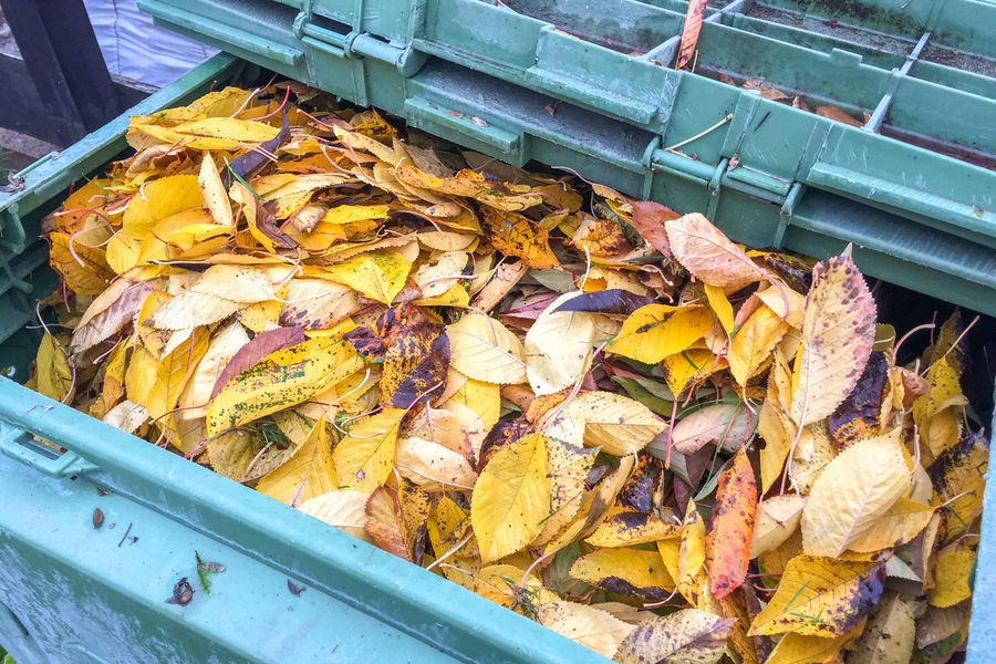 Compost with Bio Leaves🌿 Biological Close-up Compost Composting Day Enviornmental Environment Foliage Freshness Leaf Leaves No People Outdoors Recycle Recycling Vegetation