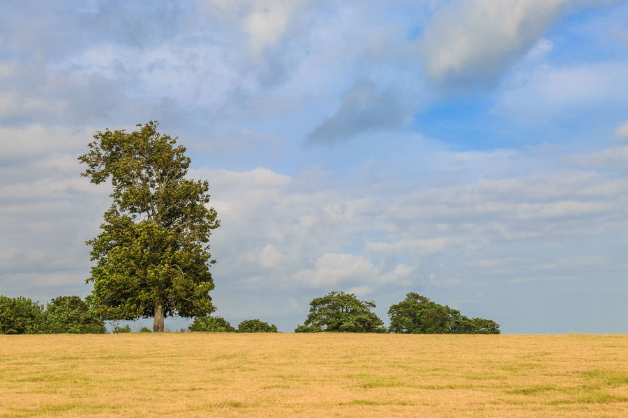 Trees in a Field Beauty In Nature Cloud - Sky Countryside Day Field Glynde Grass Grass Growth Landscape Meadow Nature No People Outdoors Scenics Sky Summer Sussex Tranquil Scene Tranquility Tree Trees