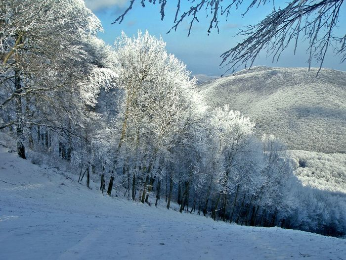 White Album I'm waiting for winter, becouse a snowy mountains are so beautyful Snow Snowy Mountains Snowy Trees Eyeem Hungary Dobogókő Winter Tel Pilis Color Palette Color Palette A Bird's Eye View