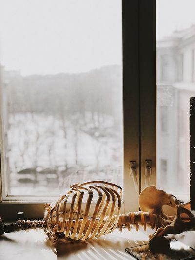 Human skeleton on table