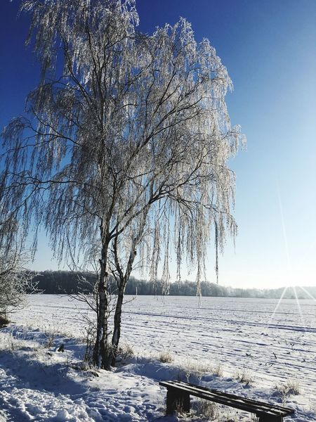 Winterimpression mit Bank Bench Bank Impressionen Natur Baum Schnee Snow Winter Cold Temperature Nature Frozen Beauty In Nature White Cold Tree Outdoors First Eyeem Photo EyeEmNewHere