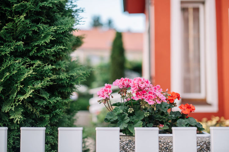 Flowers blooming in yard