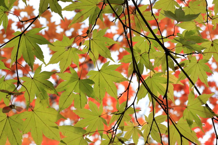 Low angle view of leaves on tree during autumn