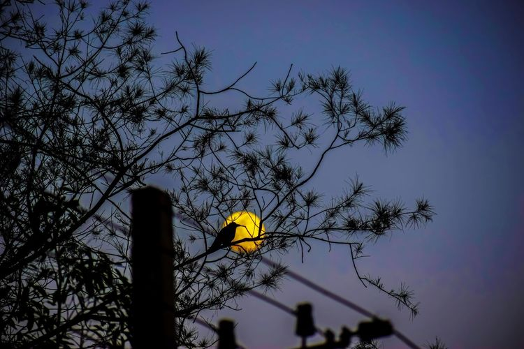 Low angle view of silhouette bird perching on tree against sky