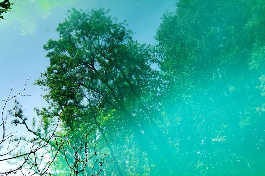Blautopf Nature Photography Beauty In Nature Blue My Point Of View Blautopf Blaubeuren Turquoise Water Summertime Vacations Reflection Tree Water Leaf Sky Green Color