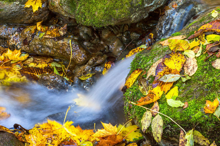 Waterfall with autumn leaves in a creek Waterfall Creek Autumn Water Flowing Leaf Fall Leaves Stone Maple Stream Yellow Low Angle Color Colorful Boulder Forest Brook Calm Nature Nobody Rock Rocks Scenic Colour Colourful Scenics Boulders Scene Leafs Peaceful Running Floating Season  Surface Moss Green Puddle Ravine Stones Float View Falling Rock - Object Beauty In Nature No People Long Exposure Flowing Water Outdoors Day
