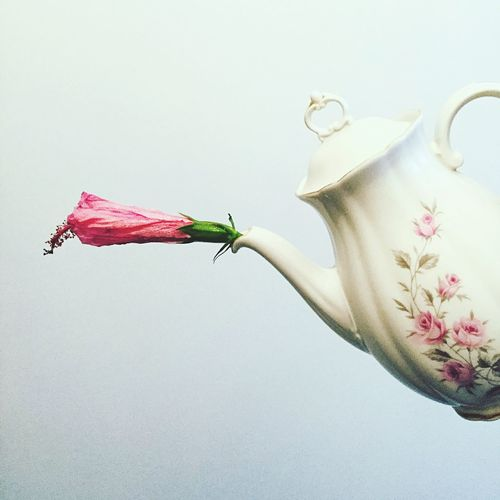 Close-up of flower in kettle over white background