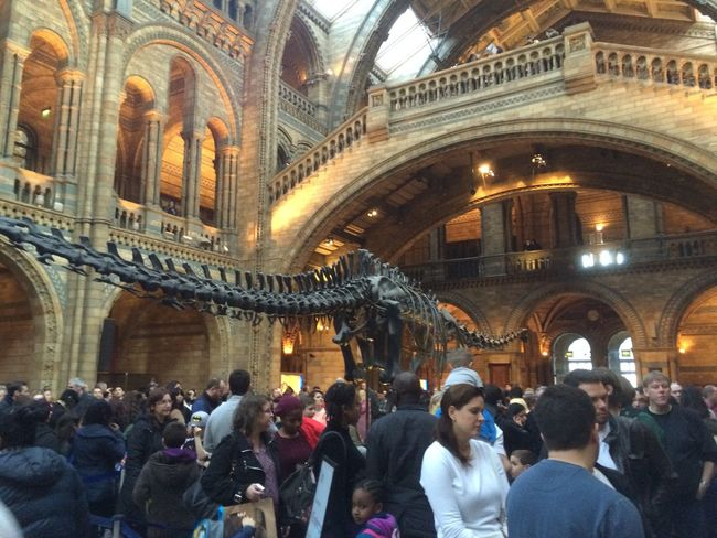 London Museum Musee Natural Museum Squelette Dinosaure