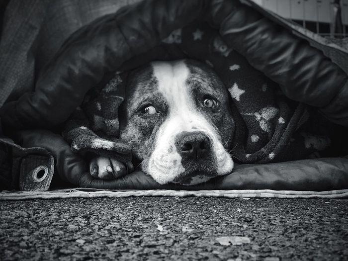 ❤️ - Dog Canine One Animal Pets Domestic Mammal Domestic Animals Autumn Mood