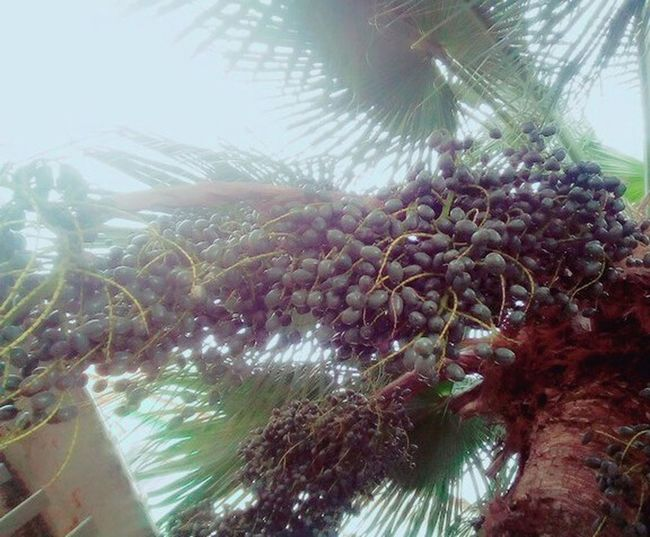 natureza Tree Flower Palm Tree Close-up Sky Plant Botany