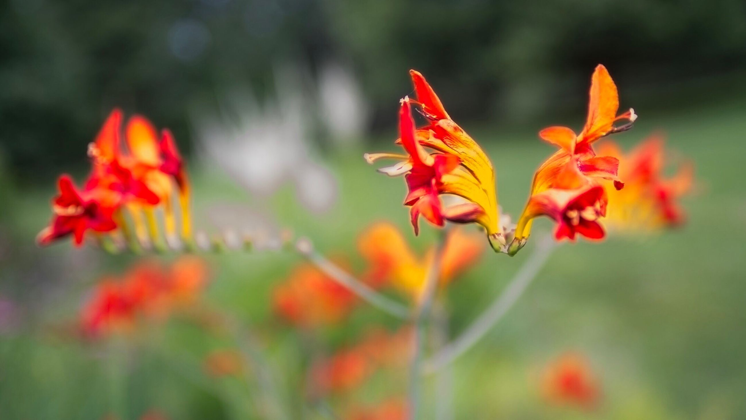 nature, flower, beauty in nature, orange color, growth, plant, close-up, fragility, day, no people, freshness, outdoors, flower head