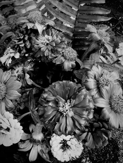 Dead Colors EyeEm Selects EyeEmSelect Flower Dead Dead Colors Black And White Black & White Blackandwhite Blackandwhite Photography Flower Fragility Plant Nature Growth Flower Head No People Beauty In Nature Day Outdoors Close-up