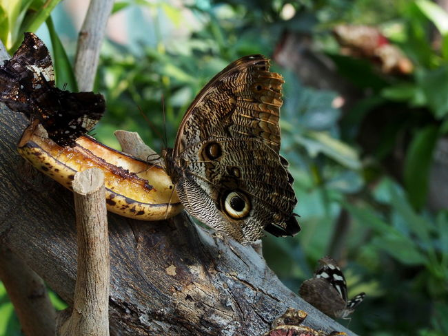 Animal Animal Themes Animal Wildlife Animal Wing Animals In The Wild Butterfly - Insect Close-up Day Focus On Foreground Group Of Animals Insect Invertebrate Nature No People Outdoors Plant Reptile Tree Tree Trunk Vertebrate Wood - Material Zoobudapest Zoology