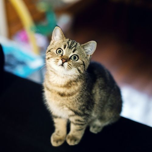 Close-up of kitten looking up