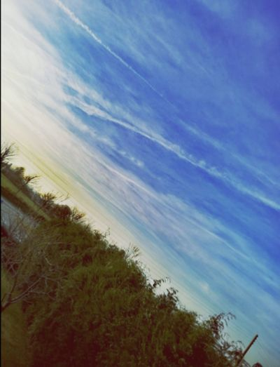 📸 - Friday 🌄 Tree Sky Nature No People Tranquility Outdoors Beauty In Nature Marram Grass Growth Day Scenics EyeEm Nature Lover Best EyeEm Shot My Year My View From My Point Of View Cloud - Sky First Eyeem Photo Check This Out Amateurphotographer  Intense Colors Eyemgallery Painting View🎨 Open Your Mind World Of Color