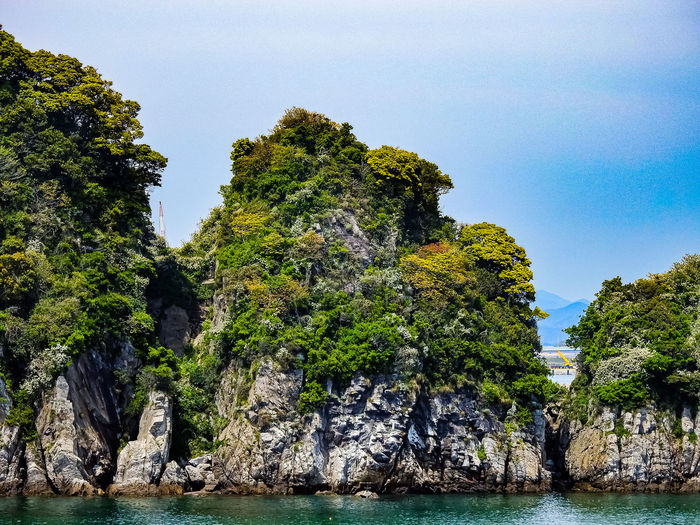 View of trees on rock by sea against sky