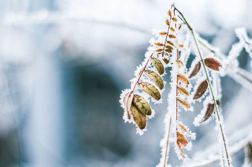 EyeEm Best Shots EyeEm Nature Lover Frozen Frozen Leaves Frozen Nature Ice Ice On Leavea It's Cold Outside My Best Photo 2016 My Winter Favorites Snow Winter Winter Leaves Winter Trees Shades Of Winter