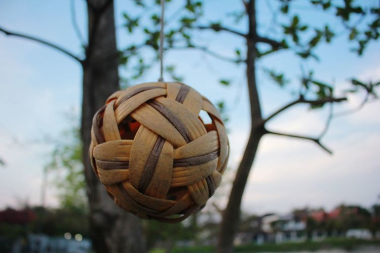Low angle view of a shell on the tree