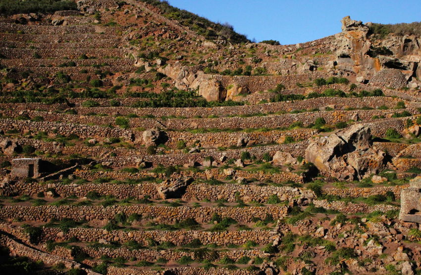 Agriculture Hard Work Pantelleria Ancient Civilization Blue Sky Built Structure Caper Field Day Landscape Nature October 2015 Outdoors Stone Walls Terraces