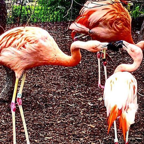 Flamingo Zoo