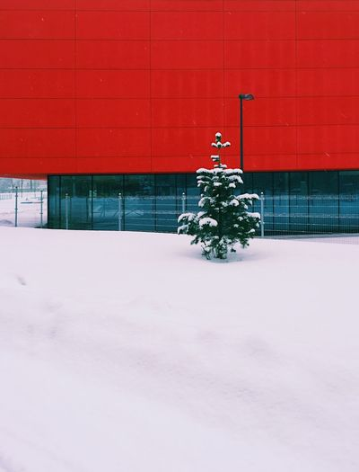 Christmas tree during winter
